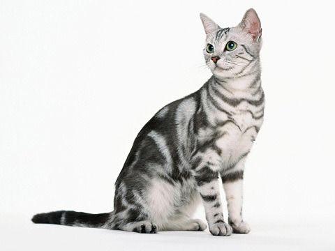 Прийом додаткових вітамінів зміцнить здоров`я кішки