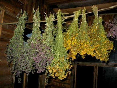 Збір лікарських рослин (правила збору лікарських рослин)